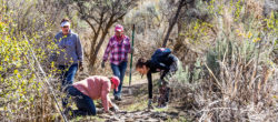 Clif Bar employees in Twin Falls, Idaho, rebuilding trails and picking up trash during the Companywide Service Day at Centennial Park.